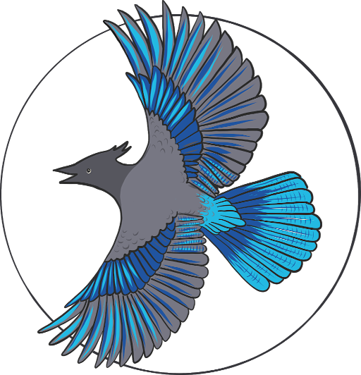 Bright Stellar Jay No Flowers