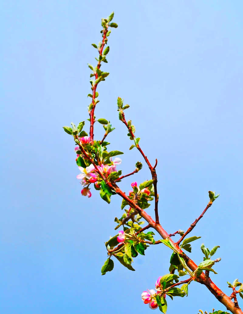 buds on branch