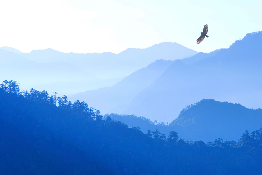 Hawk over the mountain